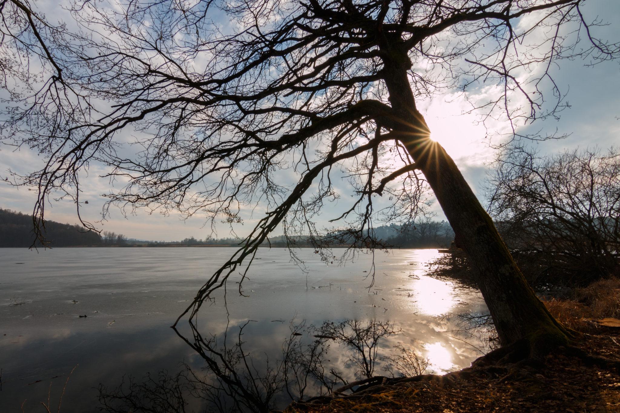 Baum und Sonne am Mindelsee