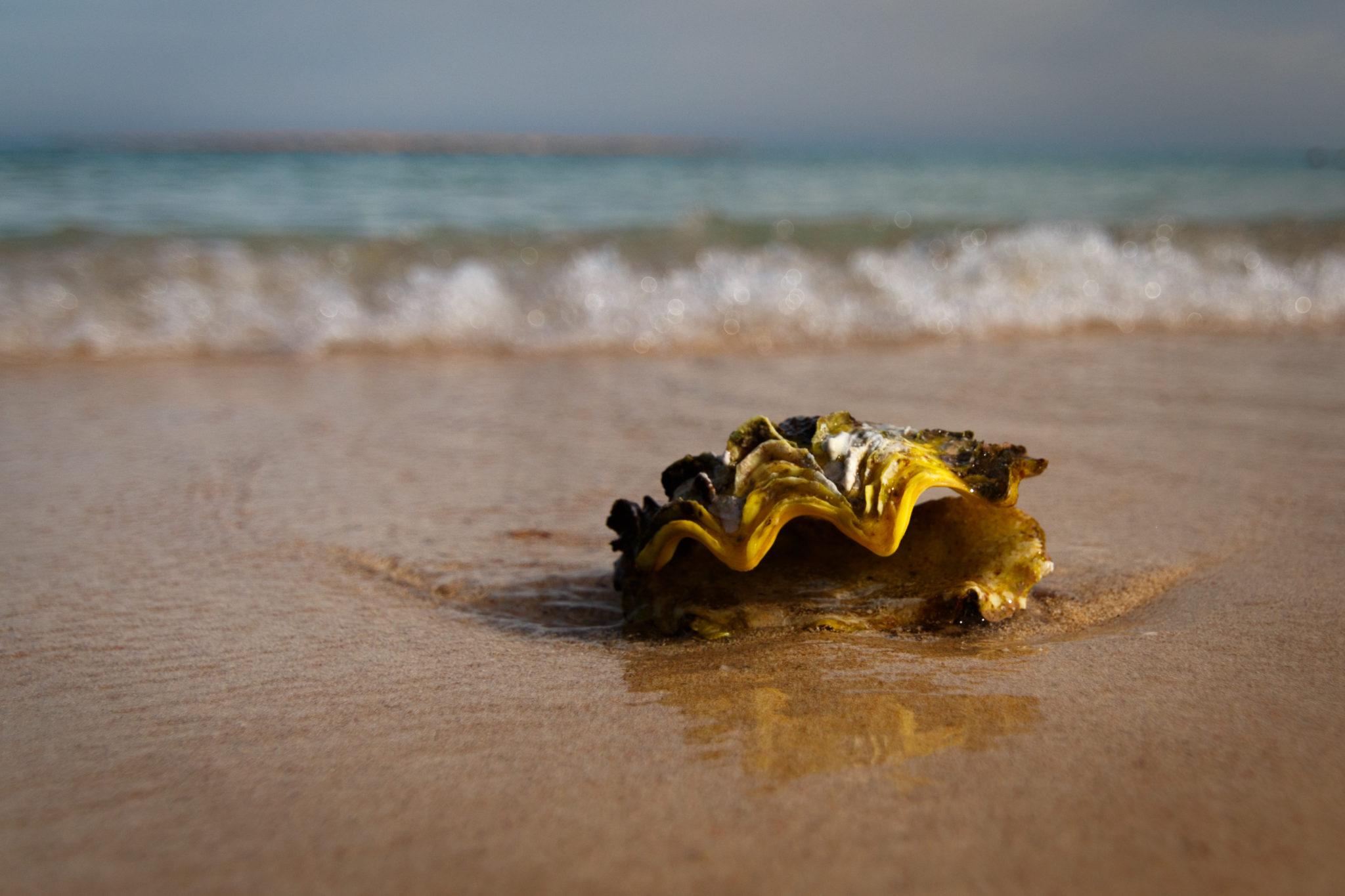 Muschel am Strand II