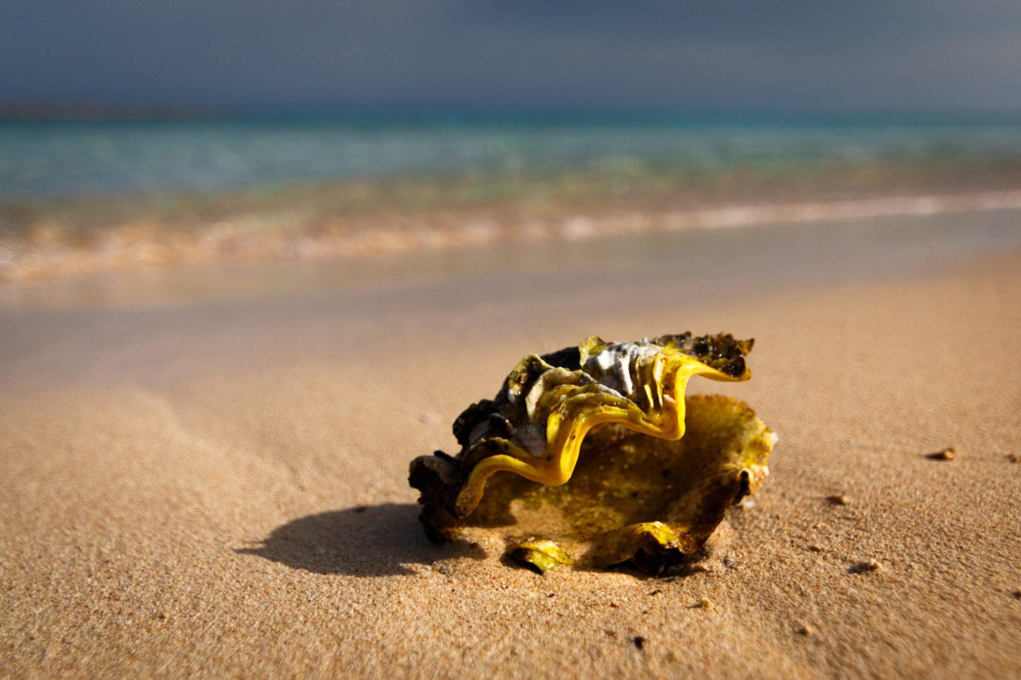 Muschel am Strand I