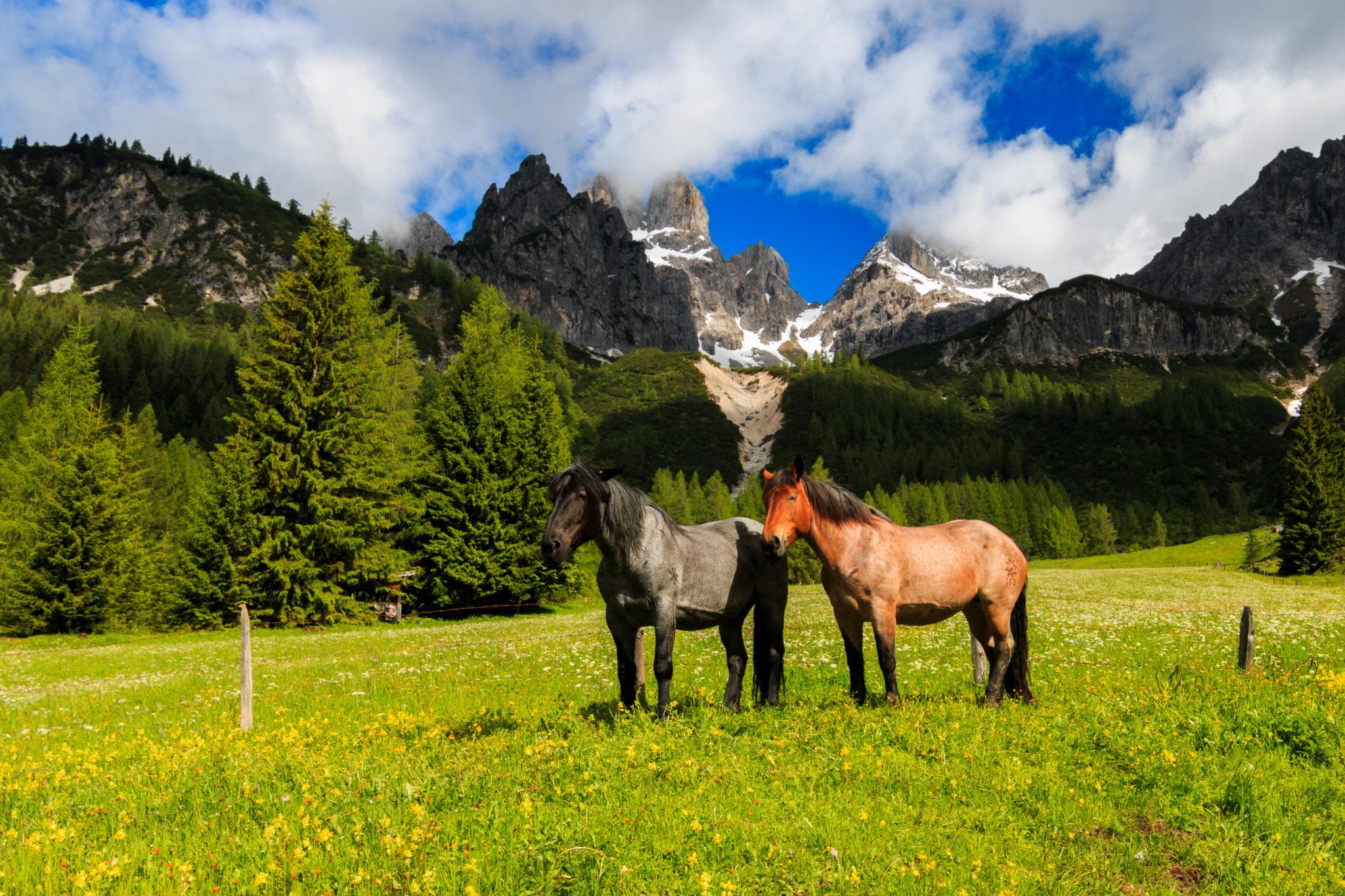 Berge und Pferde